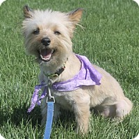 Adopt A Pet :: Cabbage Patch - Corona, CA