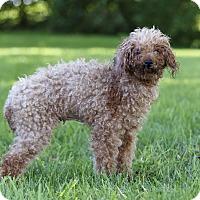 Adopt A Pet :: DELTA - Ile-Perrot, QC