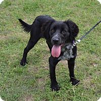 Adopt A Pet :: Ariah - Larned, KS