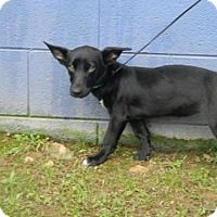 Jack Russell Terrier Mix Dog for adoption in Randleman, North Carolina - Bea