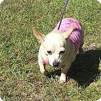 Adopt A Pet :: Opal - Carthage, NC