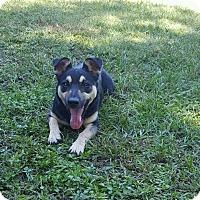 Labrador Retriever Mix Dog for adoption in Hammond, Louisiana - Pebble