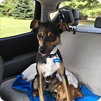 Adopt A Pet :: Louie - Florence, KY