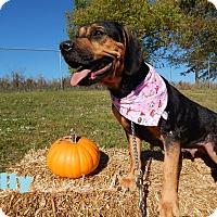 Adopt A Pet :: Sally - Bucyrus, OH