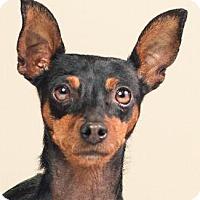 Adopt A Pet :: KITTY - Pt. Richmond, CA