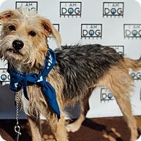 Adopt A Pet :: Ruffles - Cross Roads, TX