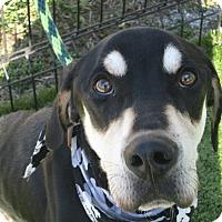 Hound (Unknown Type) Mix Puppy for adoption in Cumming, Georgia - Landon