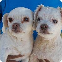 Adopt A Pet :: Gregory - Las Vegas, NV