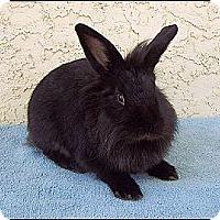 Adopt A Pet :: Aubrey - Phoenix, AZ