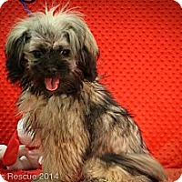 Adopt A Pet :: McDreamy - Broomfield, CO