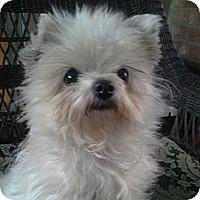 Adopt A Pet :: Cha-Cha - San Dimas, CA