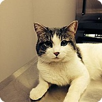 Adopt A Pet :: Baxter - Danbury, CT