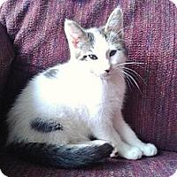Adopt A Pet :: Cal - Acme, PA