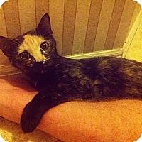 Adopt A Pet :: Kiwi - Sunrise, FL