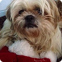 Adopt A Pet :: Angel - Muskegon, MI