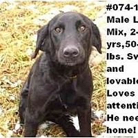 Adopt A Pet :: # 074-11 - RESCUED! - Zanesville, OH