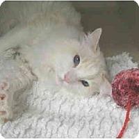 Adopt A Pet :: Samson - Mesa, AZ