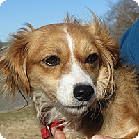 Adopt A Pet :: June Bug - Greenville, RI