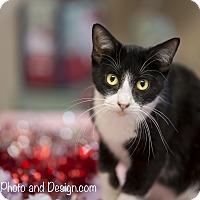 Adopt A Pet :: Scout - Fountain Hills, AZ