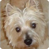 Adopt A Pet :: Chewy - Cleveland, OH
