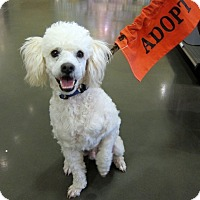 Adopt A Pet :: Sailor - Adoption Pending - Gig Harbor, WA