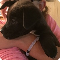 Adopt A Pet :: Thomas - Homer, NY