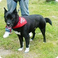 Adopt A Pet :: Hemi - Rexford, NY