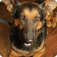 Adopt A Pet :: Courtney - Detroit, MI