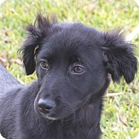 Adopt A Pet :: Harry - Wharton, TX