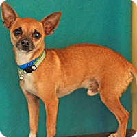 Adopt A Pet :: Chico - Waldorf, MD
