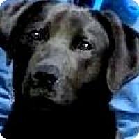 Adopt A Pet :: EMILY(A FAMILIES BEST FRIEND!! - Wakefield, RI