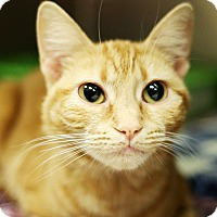 Adopt A Pet :: Sunkist - Appleton, WI