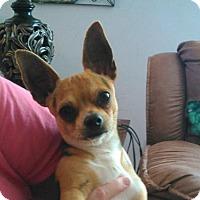 Adopt A Pet :: Connor - Martinez, GA