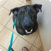Adopt A Pet :: Sally - Towson, MD