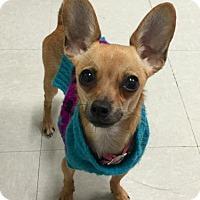 Adopt A Pet :: Minnie - Washington, DC