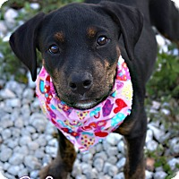 Adopt A Pet :: Aliza - Groveland, FL