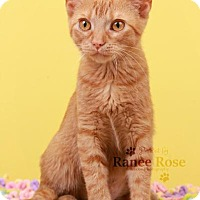 Adopt A Pet :: Alice - Sterling Heights, MI