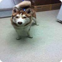 Adopt A Pet :: A1038392 - Bakersfield, CA