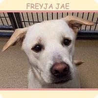 Adopt A Pet :: FREYJA JAE - Dallas, NC
