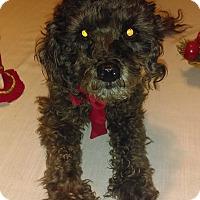 Adopt A Pet :: Prince - Manhattan, KS