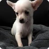 Adopt A Pet :: Lenny - Buena Park, CA