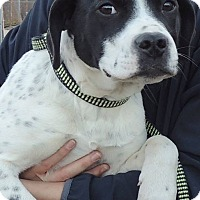 Adopt A Pet :: Saundra - Joplin, MO