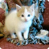 Adopt A Pet :: COURTESY POST - Spotti - Chambersburg, PA