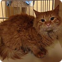 Adopt A Pet :: Noah - Salem, NH