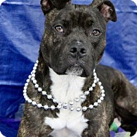 Adopt A Pet :: Cupid - Picayune, MS