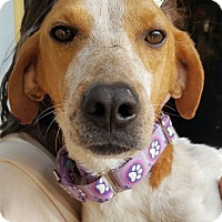 Adopt A Pet :: Paisley - Fredericksburg, VA