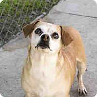 Adopt A Pet :: Maroon - Agoura, CA