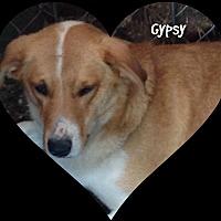 Adopt A Pet :: Gypsy - Princeton, WV