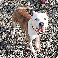 Adopt A Pet :: Annie - Trenton, NJ