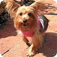 Adopt A Pet :: Tammy - Miami, FL